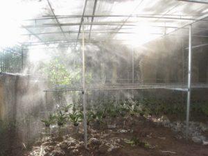 Máy phun sương cho vườn lan